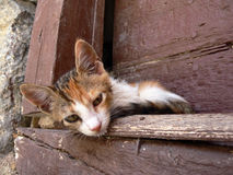 Baby cat relaxing in Greece Stock Images