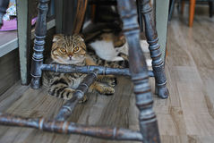 Baby cat. In the room Royalty Free Stock Image