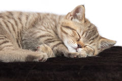 Baby cat sleeping on brown carpet. Isolated Royalty Free Stock Image
