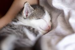 Baby cat sleeping royalty free stock photography