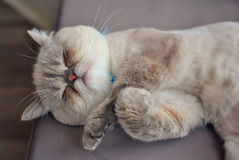 Baby cat sleeping Royalty Free Stock Images