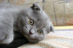 baby cat Stock Photo