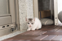 Baby cat walk Royalty Free Stock Images