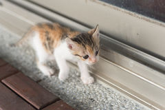Baby cat walk Stock Photography