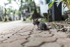 Baby cat walking Royalty Free Stock Photo