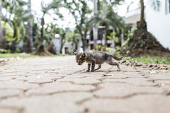 Baby cat walking Stock Photos