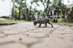 Baby cat walking Stock Images
