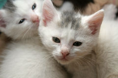 Baby cats stock image