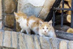 Baby cats. Two baby cats  playing outdoor on the sun Royalty Free Stock Photo