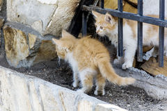 Baby cats. Two baby cats  playing outdoor on the sun Royalty Free Stock Image