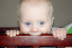 Baby Chewing on Crib. A close up of a cute baby boy who is teething, chewing on his wooden crib railing Royalty Free Stock Photography
