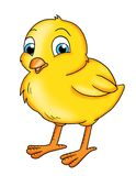 Baby chick. Colored illustration of a happy chick stock illustration