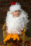 Baby Chick Stock Image