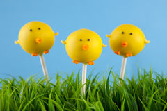Baby chick cake pops. Easter chick cake pops in grass. Round-shaped mini cakes covered with chocolate and decorated with fondant royalty free stock photography