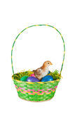 Baby Chick in Easter Basket Royalty Free Stock Photography