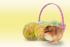 Baby chick with easter eggs and basket Royalty Free Stock Photos
