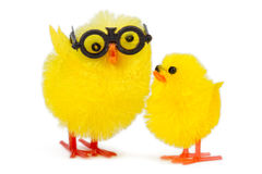 Baby chick with funny older brother Stock Photo