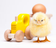 Baby chick, springtime colorful bright theme.  Royalty Free Stock Photo