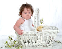 Baby and Chick in Wicker Basket. Baby girl sitting in wicker basket in front of white background with flowers on floor Royalty Free Stock Photo
