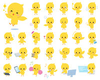 Baby chick yellow bird. Set of various poses of baby chick yellow bird Royalty Free Stock Images