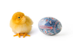 Baby-chicken and Easter egg Royalty Free Stock Images