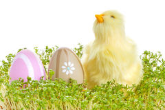Baby chicken with easter eggs on the grass Royalty Free Stock Photos