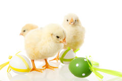 Baby chicken and easter eggs on white Stock Photo