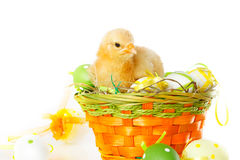 Baby chicken and easter eggs on white Royalty Free Stock Photo