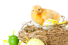 Baby chicken and easter eggs on white Stock Photos