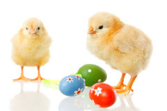 Baby chicken and easter eggs on white Royalty Free Stock Photography