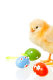 Baby chicken and easter eggs on white Royalty Free Stock Image