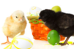 Baby chicken and easter eggs on white Stock Image