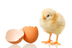 Baby chicken and egg on white Stock Photo