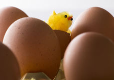 Baby chicken and eggs Royalty Free Stock Photo