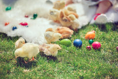 Baby chicken and ester eggs in the grass Stock Photo