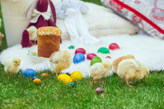 Baby chicken and ester eggs in the grass Royalty Free Stock Photography
