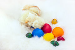Baby chicken and ester eggs over white fur Stock Images