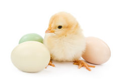 A baby chicken next to Easter eggs Royalty Free Stock Image