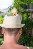 Baby chickens on mans head. Baby chickens on persons head royalty free stock images