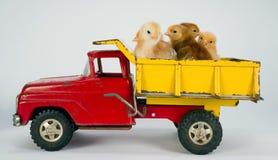 Baby Chicks Newborn Farm Chickens Ride Dump Truck Royalty Free Stock Photo