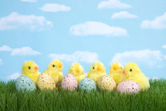 Baby chicks next to speckled eggs, Easter stock photo