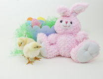 Baby chicks with stuffed Easter bunny. Baby chicks with Easter basket and stuffed Easter bunny Stock Image