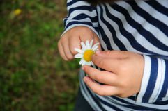 Baby child touching flower. Little kid with a daisy flower on his hands stock image