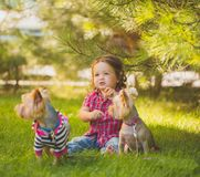 Baby girl and two yorkshire terrier Stock Photos