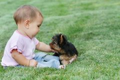 Baby child and yorkshire terrier Royalty Free Stock Image