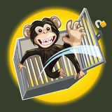 Baby Chimpanzee Breaking A Cage Royalty Free Stock Photography