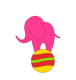 Baby Circus Elephant Balancing on Ball Royalty Free Stock Photography