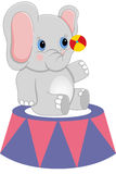 Baby circus elephant with ball Stock Image