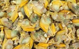 Baby clams Stock Photos