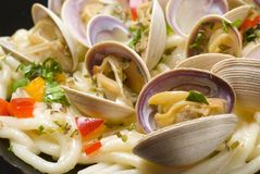 Baby clams Stock Images